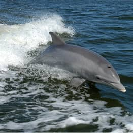 'Cocktail Of Pollutants' Found Inside Dolphins Highest Ever Recorded