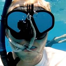 Octopus Climbs Into Stunned Diver's Mouth In Hawaii