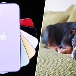 Pet Portrait Mode Is Actually A Feature On The New iPhone 11