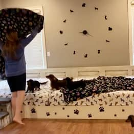 Couple Build 13ft Bed So They Can Sleep With Their Seven Dogs