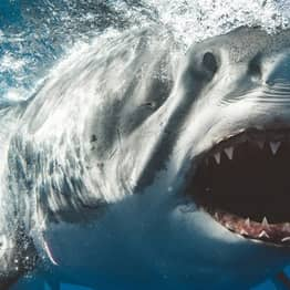 Photographer Takes Incredible Close-Up Portraits Of Great White Sharks