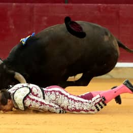 Bullfighter Clinging To His Life After Being Gored By Bull