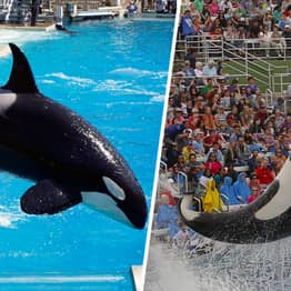 TripAdvisor Bans Tickets To SeaWorld And All Tourist Attractions With Whales And Dolphins