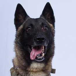 Military Dog Who Tracked Down ISIS Leader Photographed