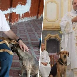 Priest Brings Stray Dogs To Sunday Mass So Families Can Adopt Them