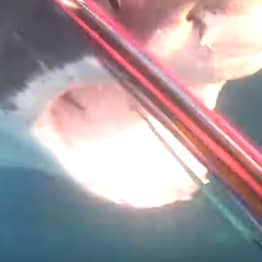 Diver Fights Off Deadly Great White Shark