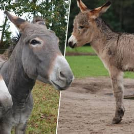Half Of The World's Donkey Population Could Be Killed In The Next Five Years