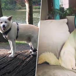 Woman Flies All The Way To South Korea To Adopt Dog Rescued From Being Eaten