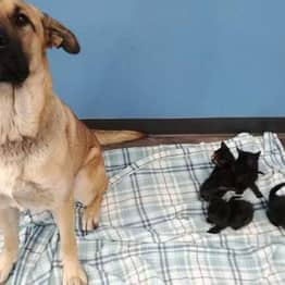Stray Dog Found Curled Up In Snow Keeping Orphaned Kittens Warm