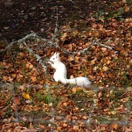 Rare White Squirrel Caught On Camera In Incredible Photograph