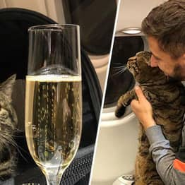 Guy Sneaks His Chubby Cat Onto Plane Only To Be Punished By Airline After Landing