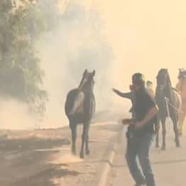 Stallion Runs Back Into California Fires To Save Its Child In Incredible Footage