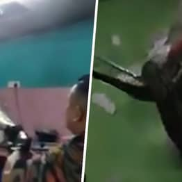 Giant Python Fights Firefighters Trying To Remove It From Hiding In Home Ceiling