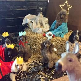 Eight Dogs Pose For Nativity Scene To Capture 'Real Essence of Christmas'