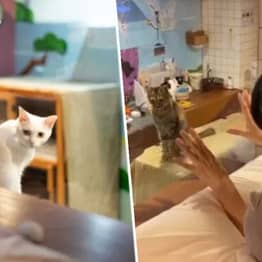 Cat Hotel Lets Guests Live And Play With Kittens Before They Adopt