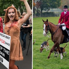 'Fox Hunts' Meet Across Country 15 Years After They Were Banned