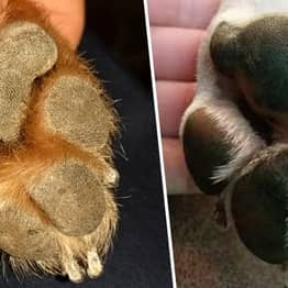 Dog Paws Look Like Koalas And You Can't Unsee It