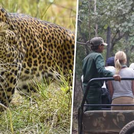 Boy, 5, Eaten Alive By Leopard While Playing With Friend In Village