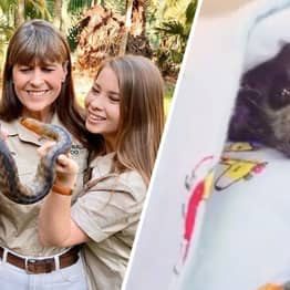 Steve Irwin's Family Has Saved More Than 90,000 Animals Including Australia Wildfire Victims