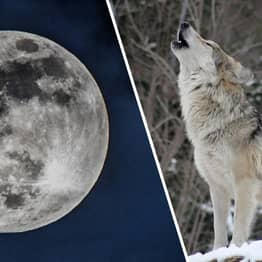 Full Wolf Moon Eclipse Will Be Visible In The Sky Tonight