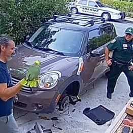 Neighbour Calls Cops About Woman Screaming 'Let Me Out' But Turns Out To Be A Parrot