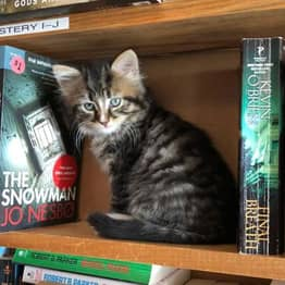 Kittens Roam Freely In This Bookstore And Customers Can Adopt Them