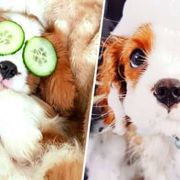 You Can Now Go On Spa Breaks With Your Dog And Get Pampered
