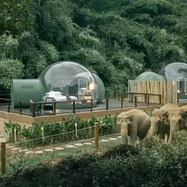You Can Sleep In See-Through Jungle Bubble Surrounded By Rescue Elephants
