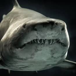 Head Of Giant 330-Million-Year Old Shark Found In Kentucky Cave Wall