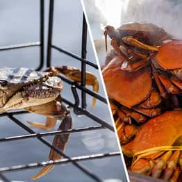 Pacific Ocean Is So Acidic It's Dissolving Dungeness Crabs, Study Finds