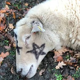 Man Arrested In Connection With 'Satanic-Style' Sheep Killings