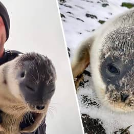 Weary And Malnourished Seal Pup Rescued Miles From Home