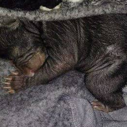 Man Finds Box Of 'Abandoned Puppies' That Are Actually Baby Bears