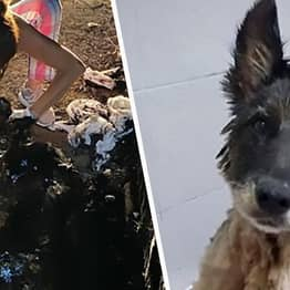 Kids Save Abandoned Dog Covered In Tar After Pups Bark To Alert Them