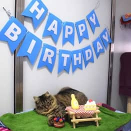 Rejected Cat Is Looking For A Forever Family After No One Showed Up To Her Birthday Party