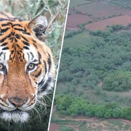 Indian Couple Buy Land Near Tiger Reserve To Allow Forests To Grow Back