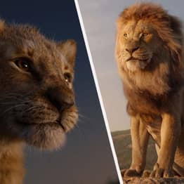 California School Forced To Pay For Playing The Lion King At Fundraiser
