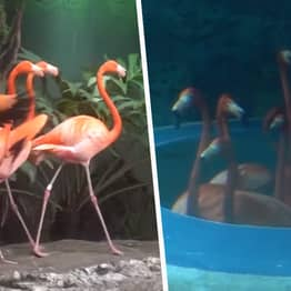 Flamingos Taken On Aquarium Tour To Visit Other Animals After It Closes To Public In Texas