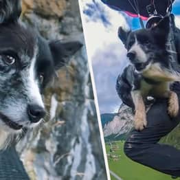 Brave Border Collie Loves Going Basejumping With Daredevil Owner