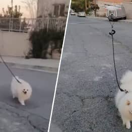 Guy Uses Drone To Walk His Dog While He's In Isolation In Cyprus
