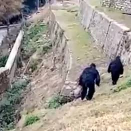 Indian Border Guards Dress Up As Bears To Scare Away Dozens Of Monkeys