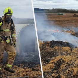 Peckish Pig Starts Farm Fire After Sh*tting Out Pedometer That Burst Into Flames