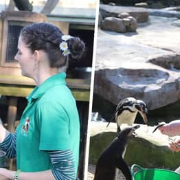 Zookeepers Move Into Wildlife Park In Cornwall For 12 Weeks To Self-Isolate With Animals