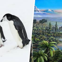 Fossilised Remains Of 90-Million-Year-Old Rainforest Found Under Antarctic Ice
