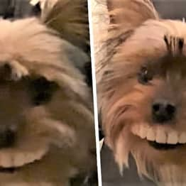 Michigan Guy Buys Fake Teeth To Cheer Himself Up In Isolation, His Dog Steals Them