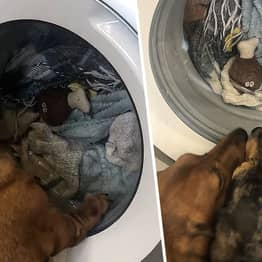 Dog Stares At Machine For Hour-Long Cycle As Owner Washes Favourite Toy