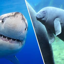 One In Five Giant Marine Species Will Become Extinct Within Century, Scientists Predict