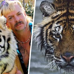 Conservationist Karl Ammann Says Netflix's Tiger King Was 'A Missed Opportunity'