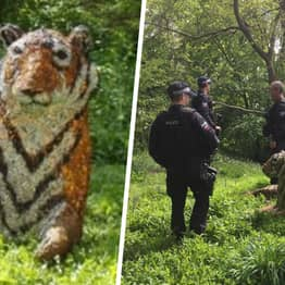 Life-Size Tiger Sculpture Sparks Armed Police And Helicopter Response In Kent