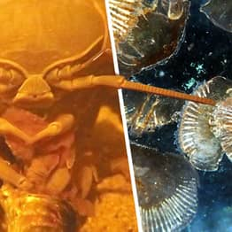 Giant Undersea Bug Poops For First Time In Two Years